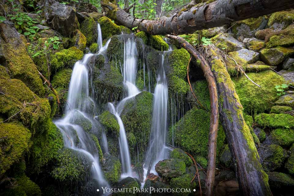 Graceful, Sinewy Creek Falls in Cool mossy canyon - Avalanche Creek