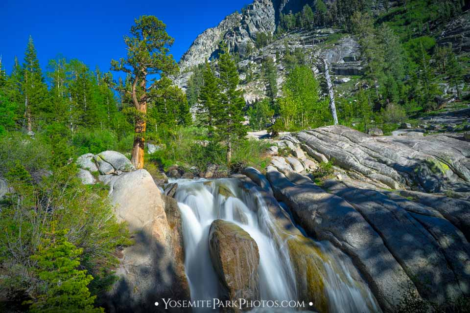 Rock canyon falls, with bristlecone pine tree