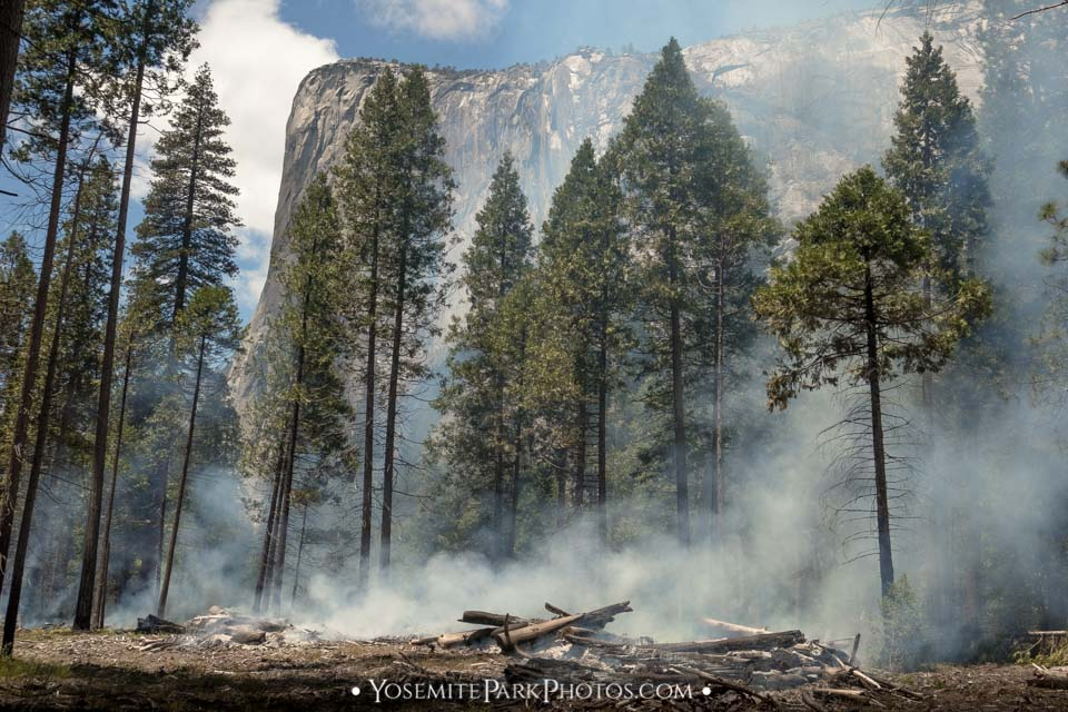 Smoky Forest Trees With El Capitan - Yosemite wildfires