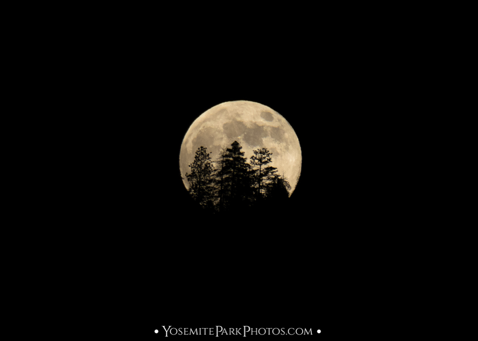 Forest trees silhouette - Yosemite full moon rising over mountain.