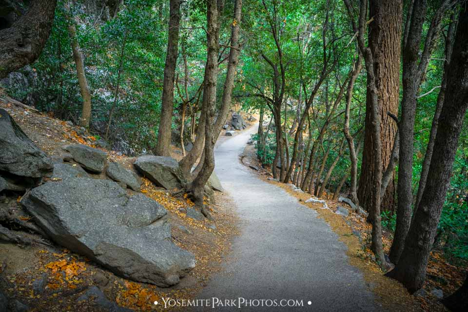 Paved Forest Path and boulders