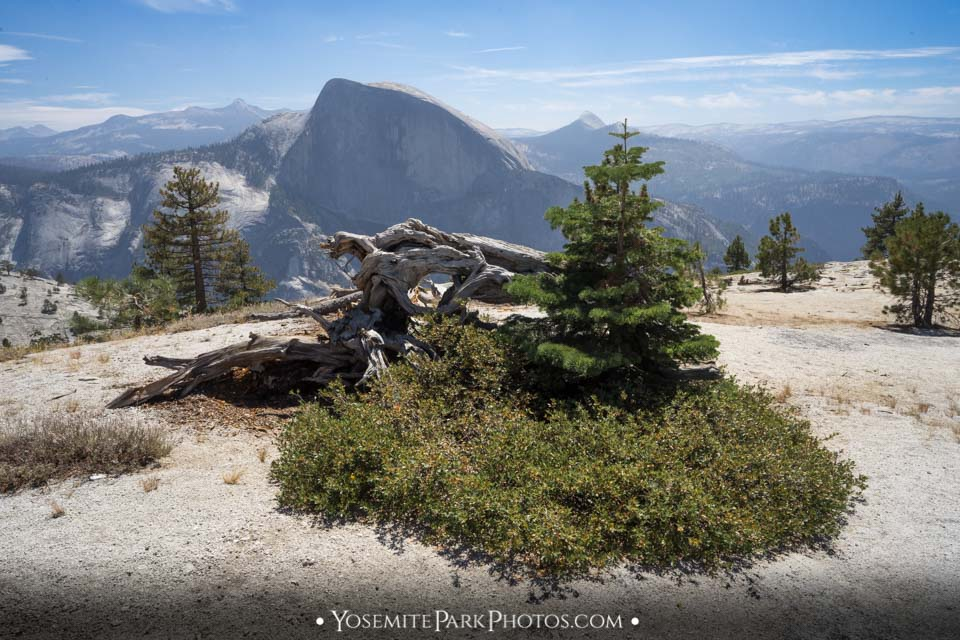 """Head On"" Half Dome View - North Dome hike photos"