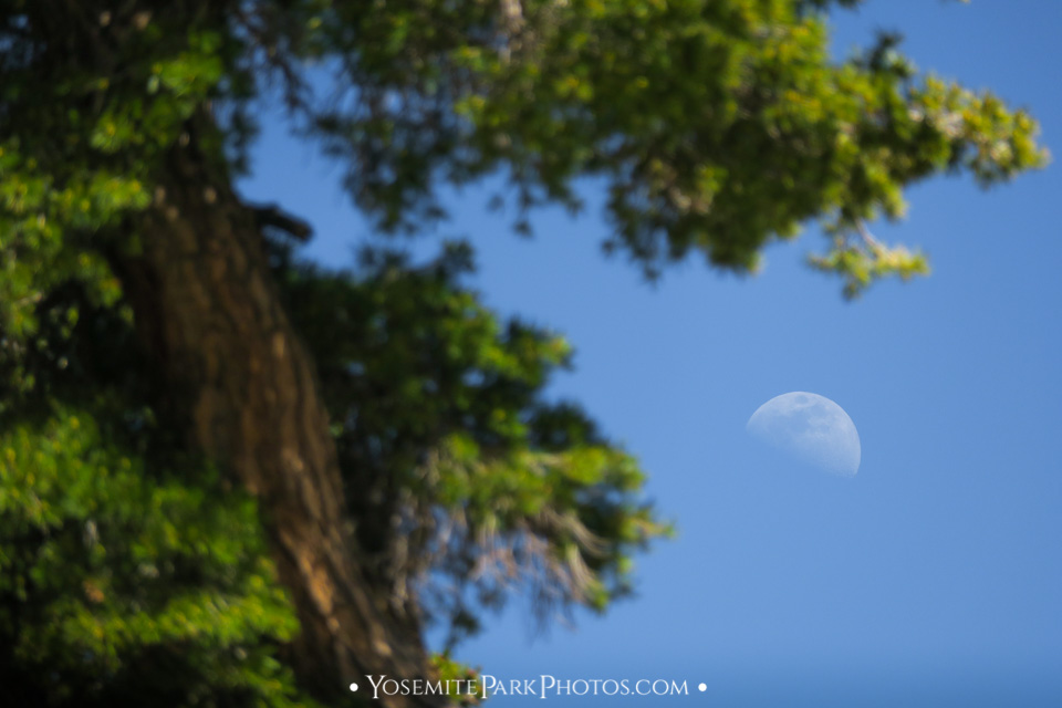 Half Moon Through Tree Leaves - Daytime Shot
