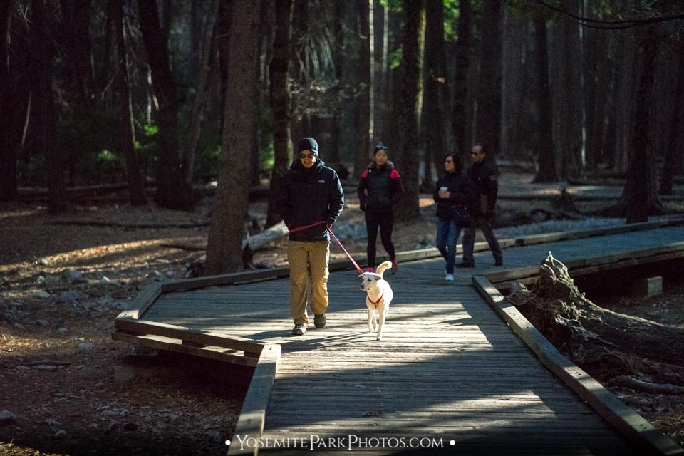 Tourists & dog hiking the wooden plank trail - Lower Yosemite Falls Hike Photos