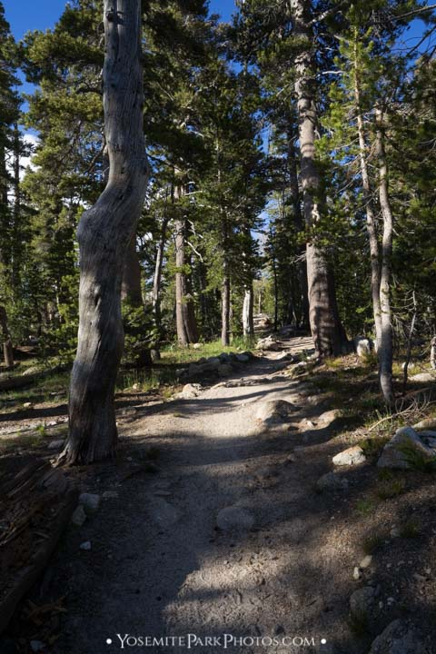 Scenic trail through the trees, portrait  - Cathedral Lakes hike