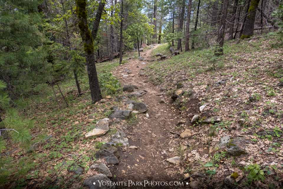 Clearly marked dirt trail through forest - Inspiration Point hike photos
