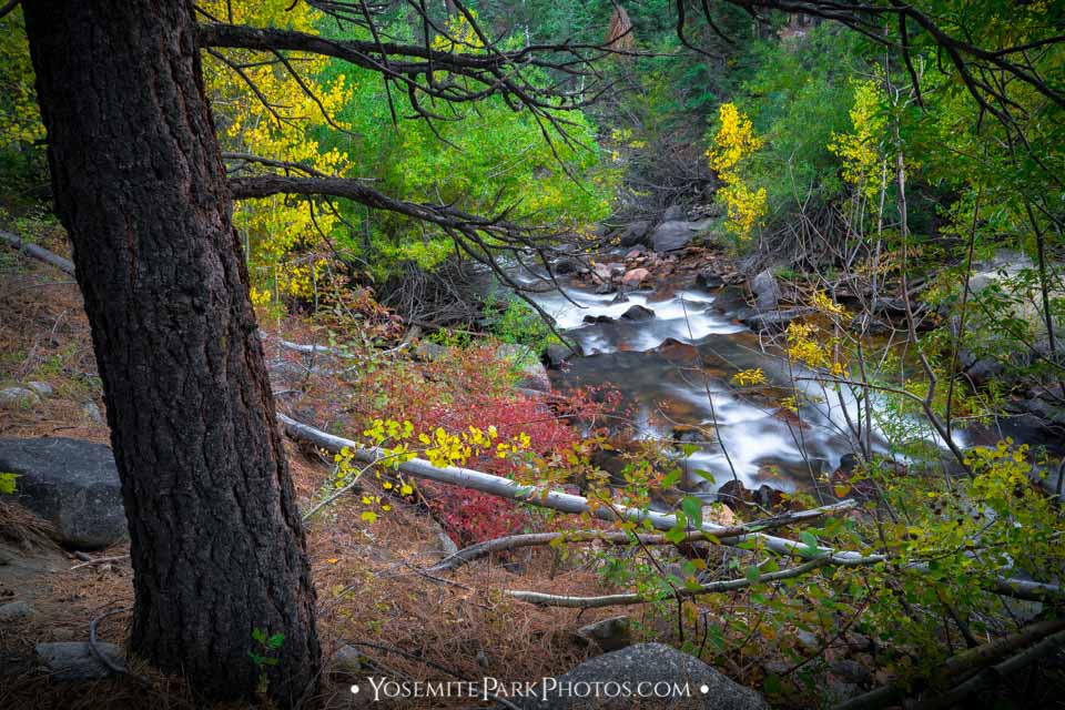 Lee Vining Creek - Autumn long exposure in the forest