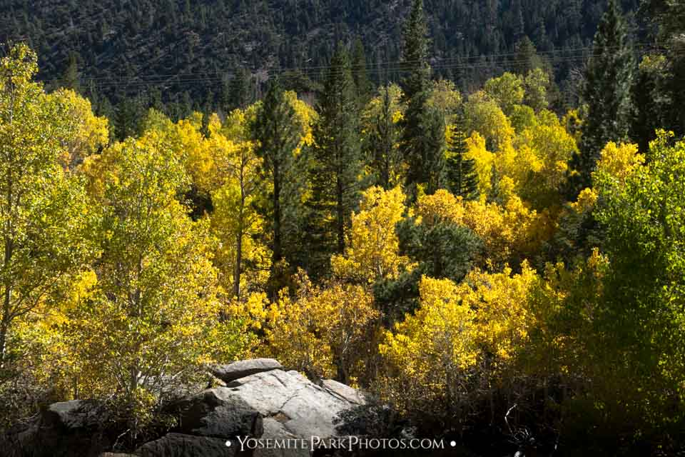 Golden Aspen tree Stand from above