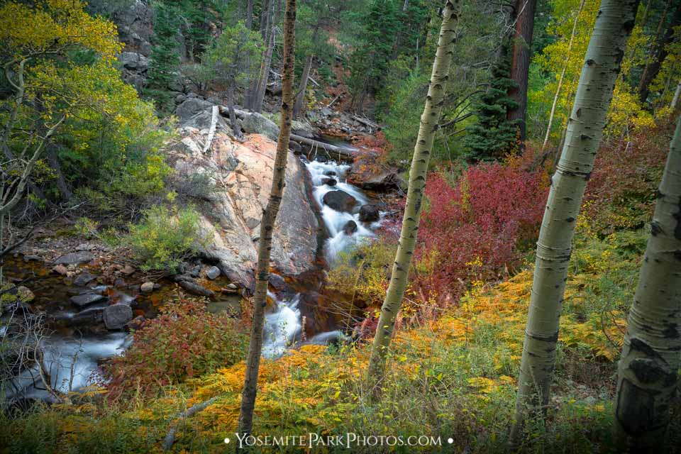 Vibrant color in the forested canyon
