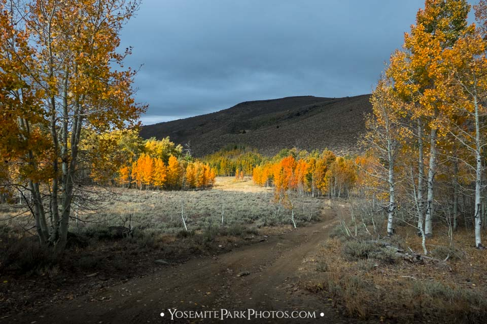 Dramatic lighting on Lobdell Lake Rd Aspens - Eastern Sierra Fall Colors