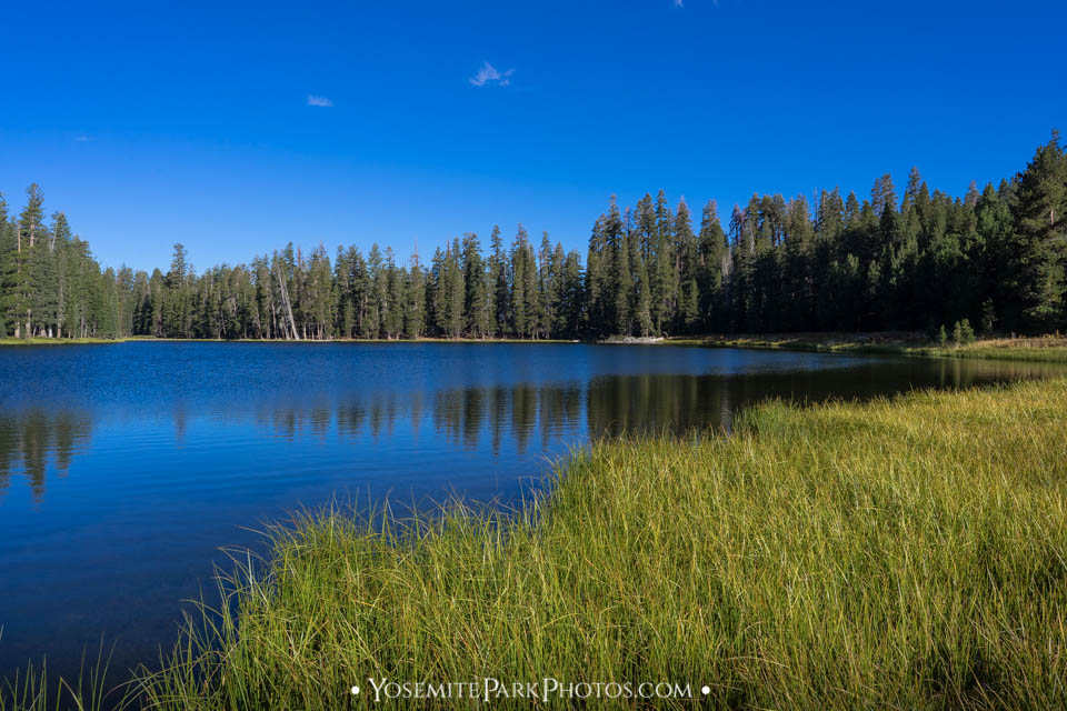 Grassy blue sky Lukens lake photos