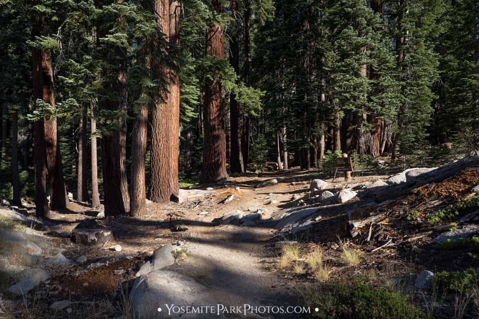 Shady forest trail through thick trees  - Lukens Lake hike photos