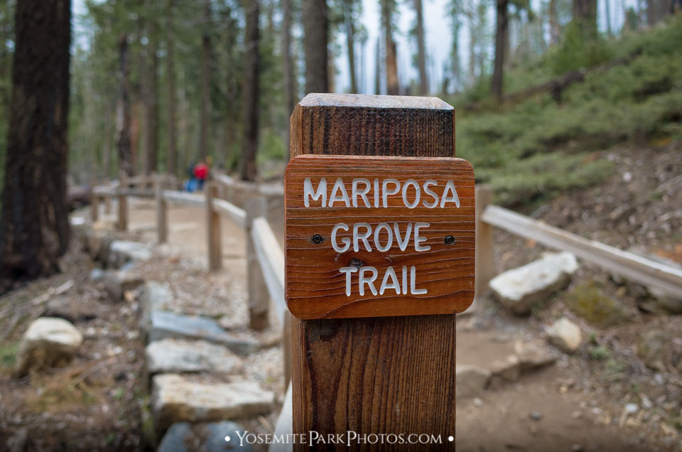 Mariposa Grove Trail sign along the way