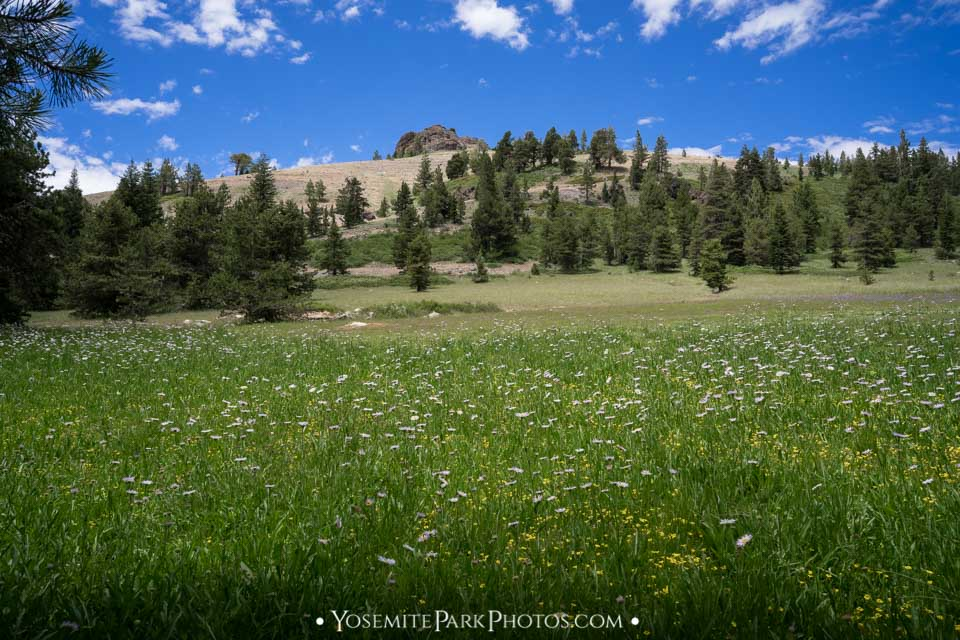 Wildflowers in Cape Horn Meadow
