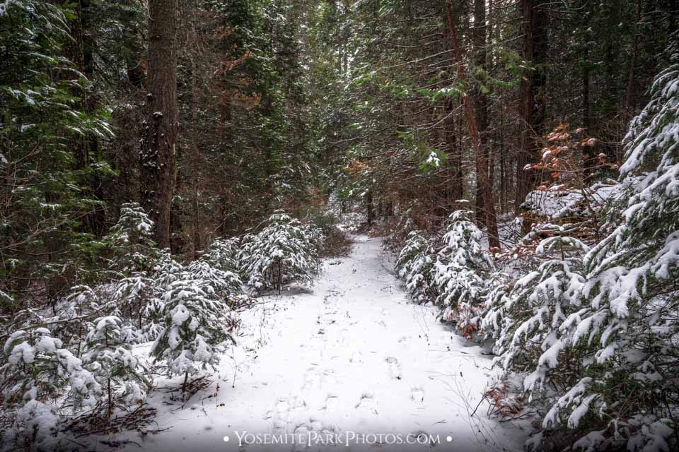 Snow covered trail in the forest along the way