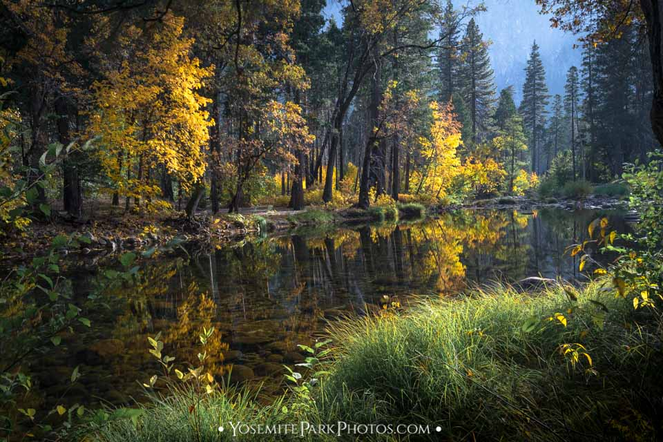 Yellow leaves reflected in the Merced River - October