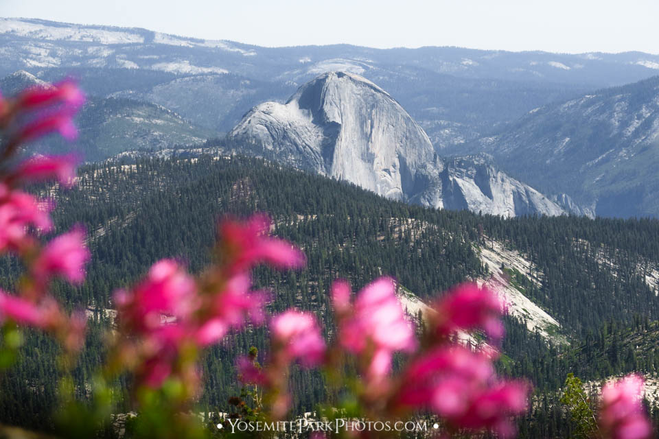 Half Dome  Scene - Photos of Yosemite wildflowers