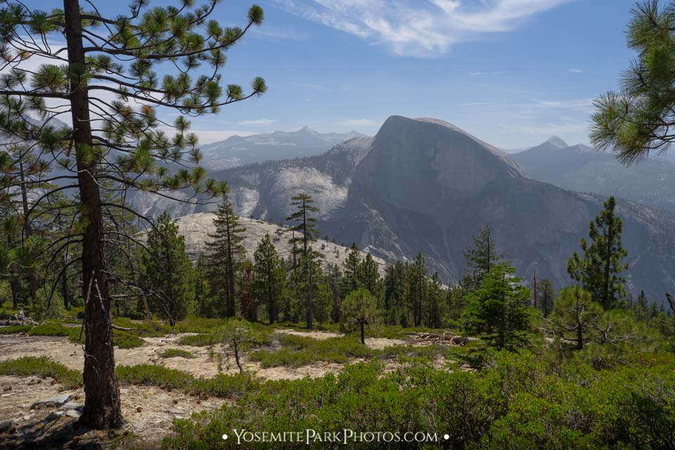 Front view of Half Dome through trees