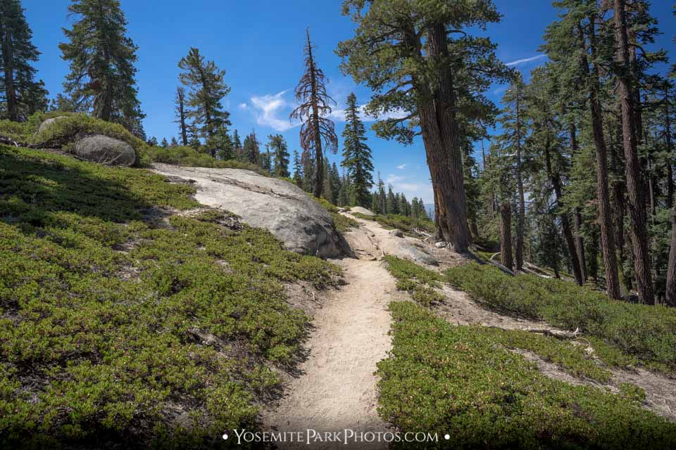 Dirt Path to North Dome, through Forest - Yosemite Trails
