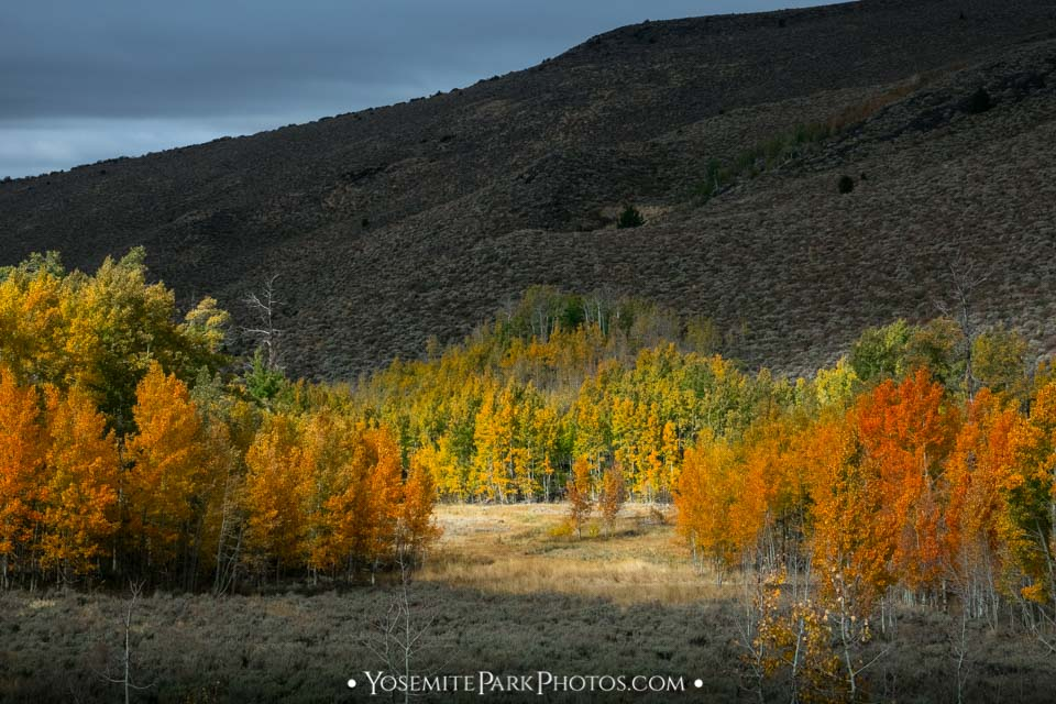 Fiery aspen tree colors of orange and red - Lobdell Lake Road photos