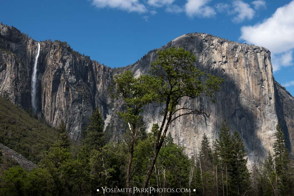 Skinny Ribbon Fall and El Capitan through trees