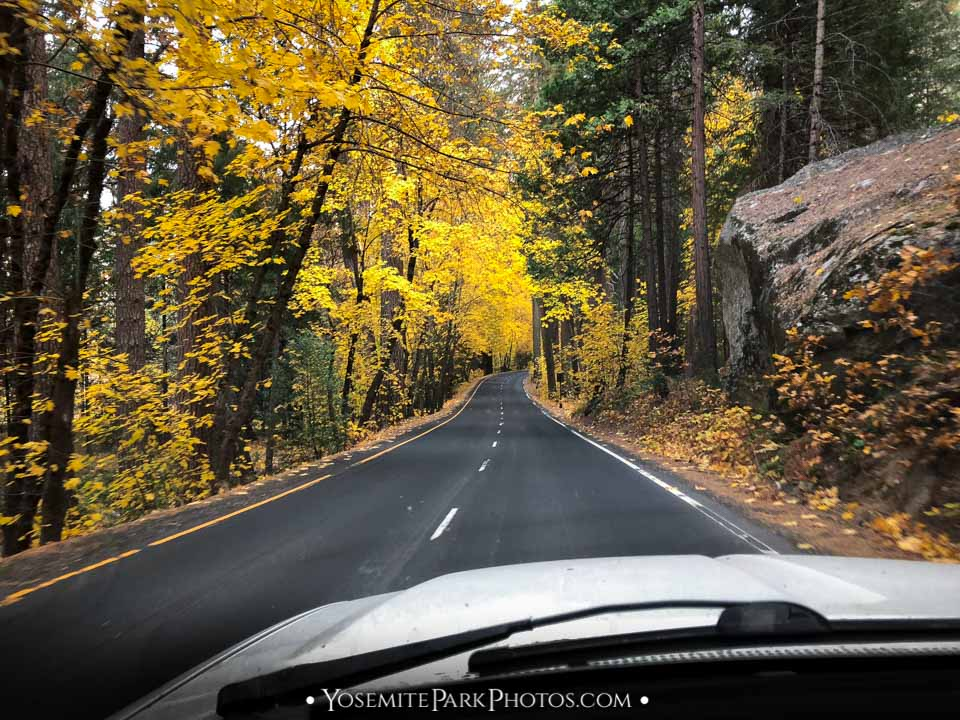 A Particularly Dazzling Stretch of Fall Color on the drive - Yosemite road trip