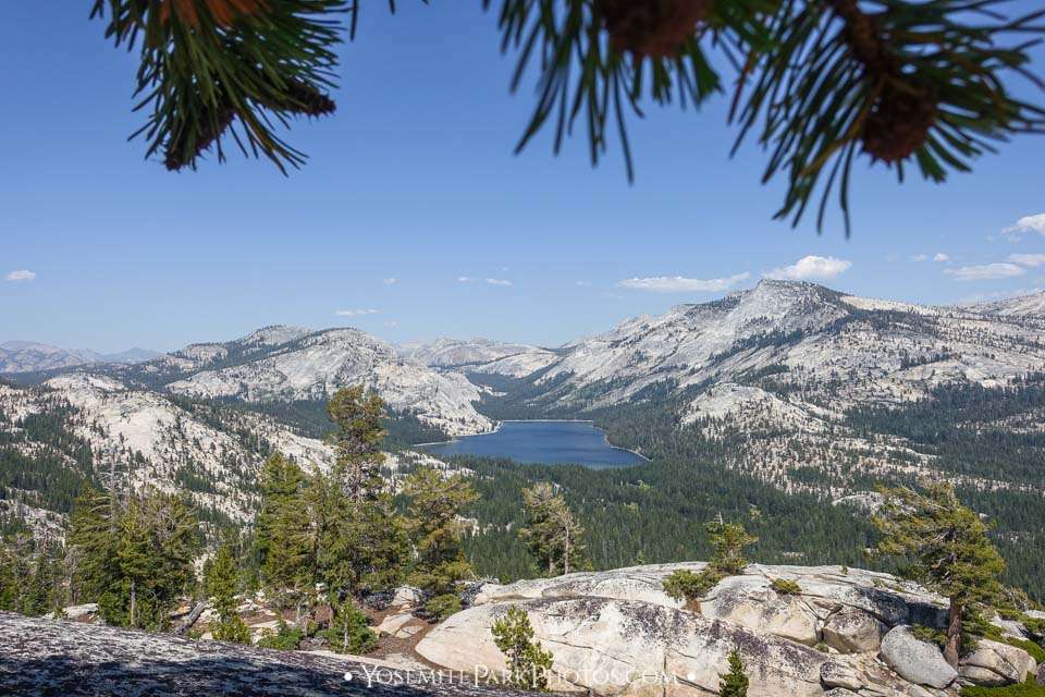 View of Tenaya Lake through the Pine Trees above Olmsted Point