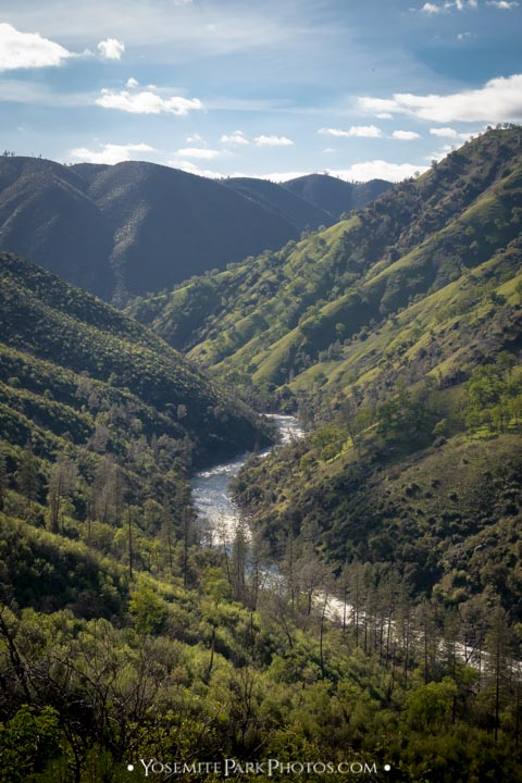 Tuolumne River snaking through green foothills - portrait