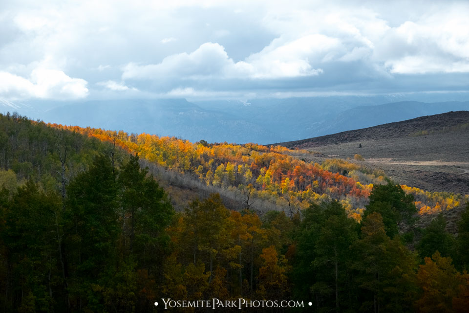 Patches of vibrant color in these dreary hillsides - Lobdell Lake Road photos