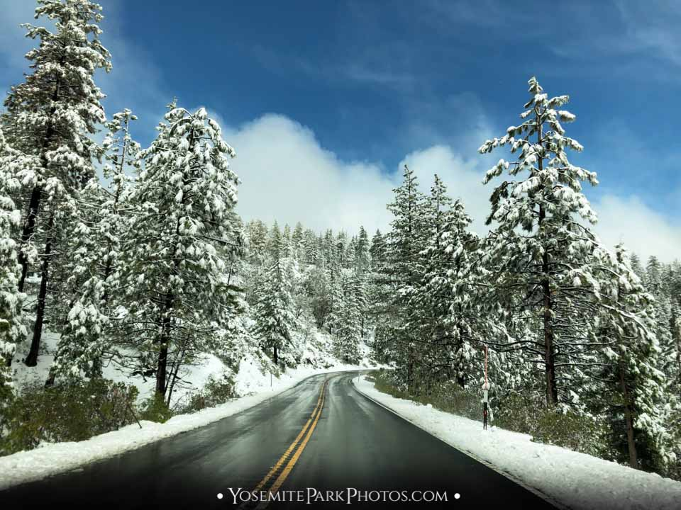 Forest along SR120 (Big Oak Flat Rd) after winter snow storm - Yosemite road trip